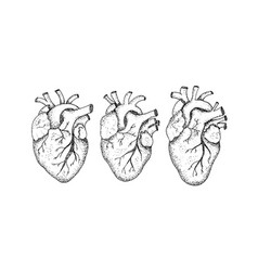 dotwork three human hearts vector image vector image