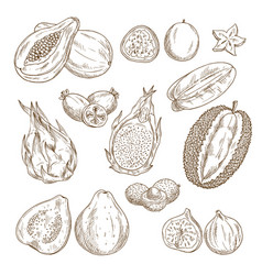 Exotic tropical fruit isolated sketch set vector