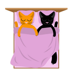 Cats lovers in bed pets sleep romantic animal vector