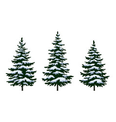 christmas fir trees vector image
