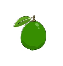 Citrus Lime Isolated on White vector image
