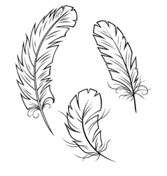 Bird feathers set vector