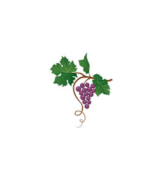 Grape bunch floral sign garden wine background vector