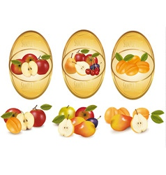fruit labels vector image