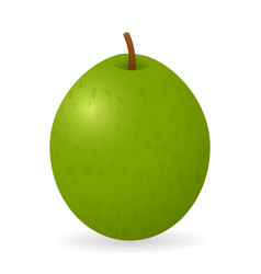 guava isolated vector image