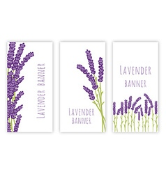 Set of three lavender banners vector image