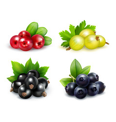Berry clusters realistic set vector