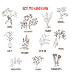 collection of anti-aging herbs vector image vector image