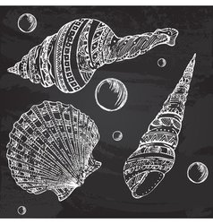 Set of decorative seashells painted with chalk vector