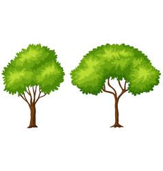 two different shapes of tree vector image vector image