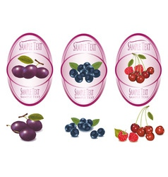 Berry labels vector