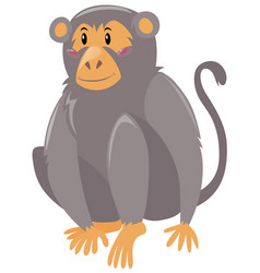 cute monkey on white background vector image