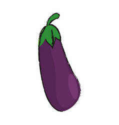 Eggplant food diet healthy vector