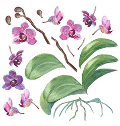 set of isolated watercolor orchids for your design vector image vector image