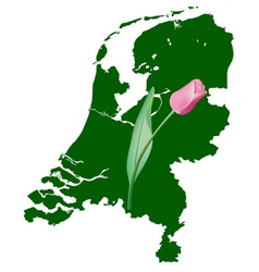 Netherlands map with tulip vector
