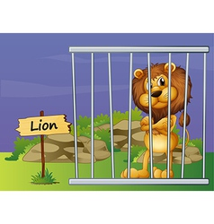 A scary lion vector image vector image