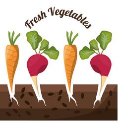 fresh vegetables growth harvest image vector image