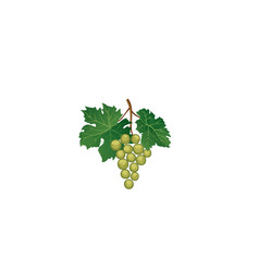 Grape bunch with leaves floral wine retro sign vector