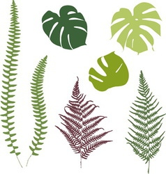 Fern and monstera silhouettes isolated on white vector