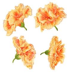 Tropical blossoms yellow hibiscus vector