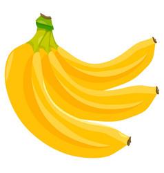 Banana fruits food object vector