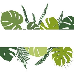 Tropical background with fern and monstera leaves vector