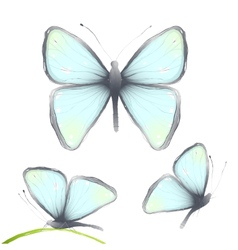 Three Hand Drawn Delicate Blue Butterflies vector image vector image