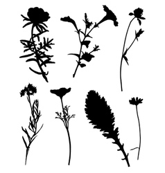 Collection of silhouettes of flowers vector image