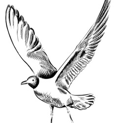 Drawing seagull vector