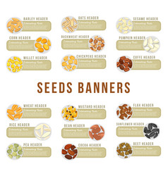 Cards or banners header with seeds kernels food vector