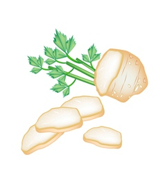 Fresh slice celery root on white background vector