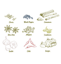 set of colored hand drawn culinary spices vector image vector image