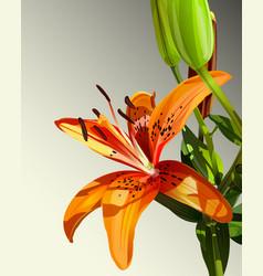 Lily watercolor backgroun vector