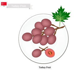 Ripe grape a popular fruit in turkey vector