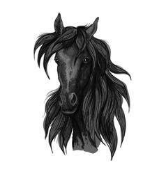 Arabian horse head sketch with black racehorse vector