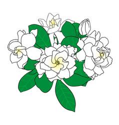 bouquet of gardenia jasminoides cape jasmine vector image
