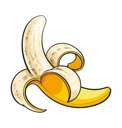 One open peeled ripe banana sketch style vector