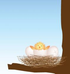 hatching chick vector image vector image