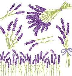 Lavender design elements vector image vector image