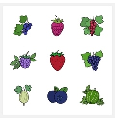 Berry flat design vector