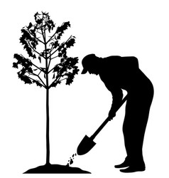 man planting a tree vector image vector image