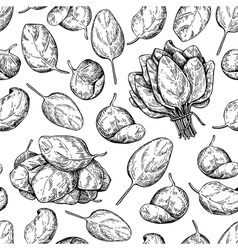Spinach bunch and leaves hand drawn vector image