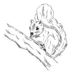 squirrel on a branch vector image vector image