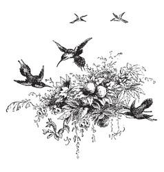 Humming bird vintage vector