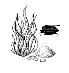 Spirulina seaweed powder hand drawn vector image