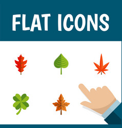 Flat icon leaves set of alder hickory leafage vector
