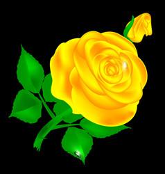 dark and yellow rose vector image