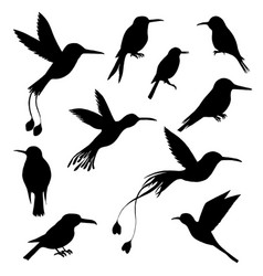 Set of hummingbirds silhouettes vector