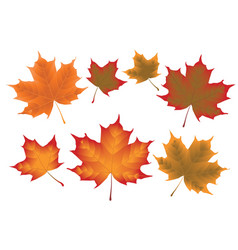 Maple leaves vector