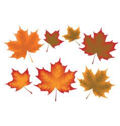 Maple leaves vector